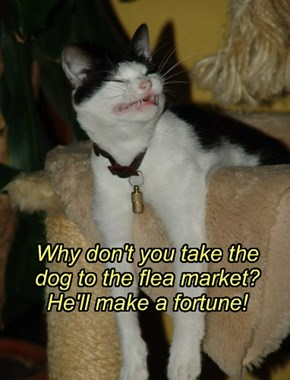 Why don't you take the dog to the flea market? He'll make a fortune!