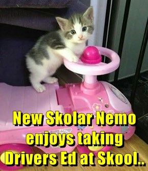 New Skolar Nemo enjoys taking Drivers Ed at Skool..