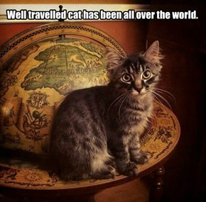 Well travelled cat has been all over the world.