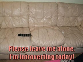 Please leave me alone,     I'm introverting today!