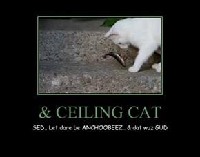 & CEILING CAT
