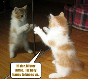 Nemo discubers a mirror in hims room.. Nemo hab neber seen a mirror befor!
