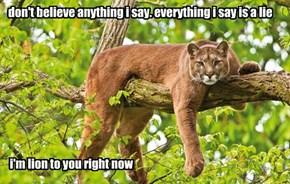 the lion paradox