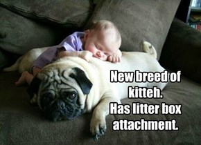 New breed of kitteh. Has litter box attachment.