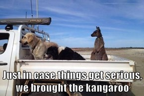 Just in case things get serious, we brought the kangaroo