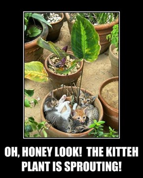 OH, HONEY LOOK!  THE KITTEH PLANT IS SPROUTING!