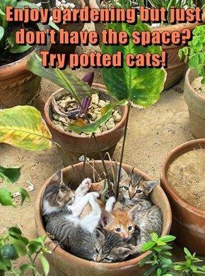 Enjoy gardening but just don't have the space? Try potted cats!