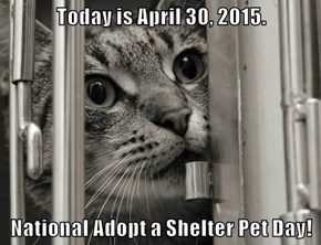 Today is April 30, 2015.   National Adopt a Shelter Pet Day!