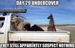 DAY 29 UNDERCOVER