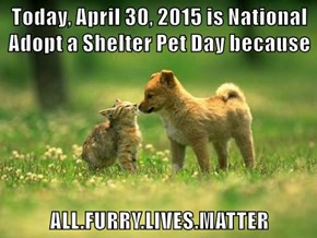 Today, April 30, 2015 is National Adopt a Shelter Pet Day because  ALL.FURRY.LIVES.MATTER