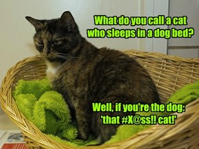 What do you call a cat who sleeps in a dog bed?