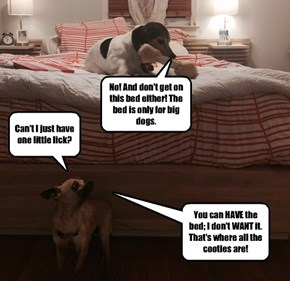 Some dogs can be very greedy.