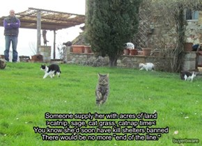 """Someone supply her with acres of land  >catnip, sage, cat grass, catnap time<  You know she'd soon have kill shelters banned  There would be no more """"end of the line."""""""