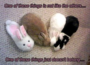 """Hey! """"Different"""" doesn't mean not belonging!!"""