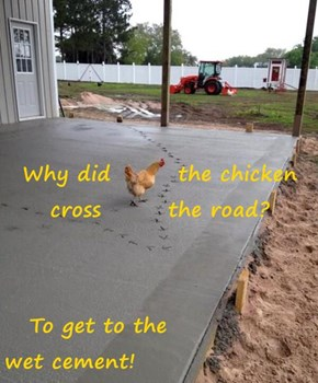 Why did        the chicken cross        the road?     To get to the                      wet cement!
