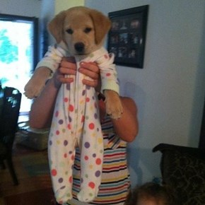 Here's a Puppy in a Onesie for Your Monday