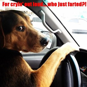 For cryin' out loud....who just farted?!