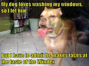 My dog loves washing my windows, so I let him.  But I have to admit he makes faces at the taste of the Windex