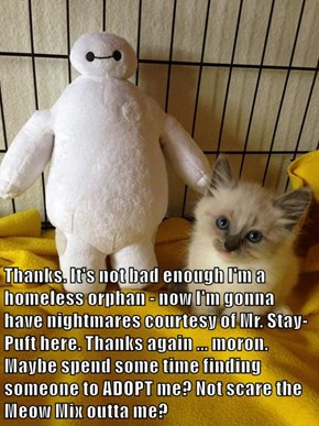 Thanks. It's not bad enough I'm a homeless orphan - now I'm gonna have nightmares courtesy of Mr. Stay-Puft here. Thanks again ... moron. Maybe spend some time finding someone to ADOPT me? Not scare the Meow Mix outta me?