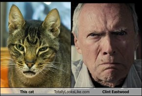 This cat Totally Looks Like Clint Eastwood