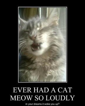 EVER HAD A CAT MEOW SO LOUDLY