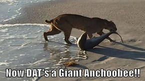Now DAT's a Giant Anchoobee!!