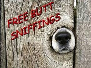 FREE BUTT SNIFFINGS