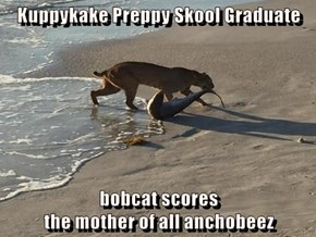 Kuppykake Preppy Skool Graduate  bobcat scores                                                                the mother of all anchobeez