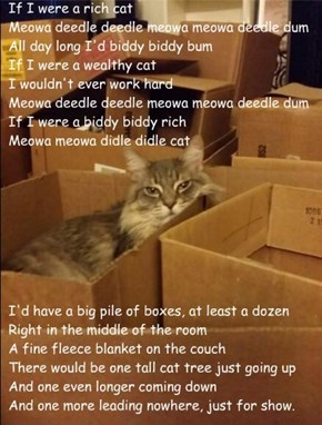 If I Were A Rich Cat