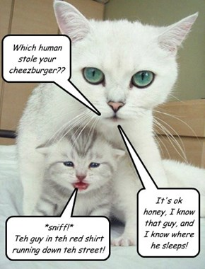 Which human stole your cheezburger??