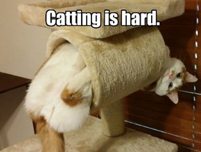 Catting is hard.