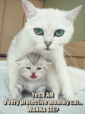 Yes, I AM                                                         a very protective mommy cat... WANNA SEE?