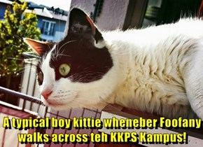 A typical boy kittie wheneber Foofany walks across teh KKPS Kampus!