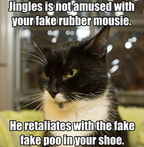 Jingles is not amused with your fake rubber mousie.