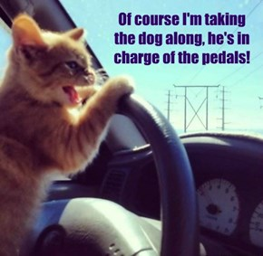 Of course I'm taking the dog along, he's in charge of the pedals!
