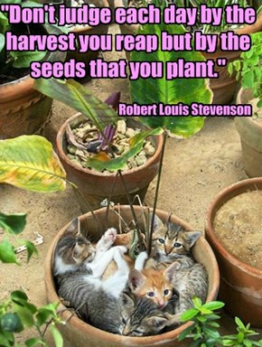 """""""Don't judge each day by the harvest you reap but by the seeds that you plant."""""""