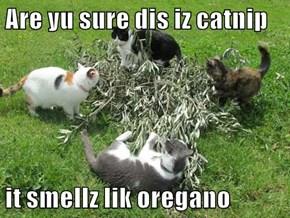 Are yu sure dis iz catnip  it smellz lik oregano