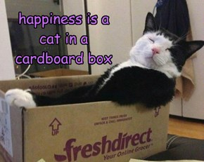 happiness is a cat in a cardboard box