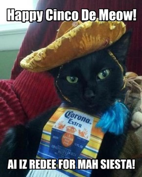 Happy Cinco De Meow!