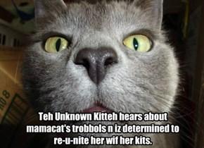 Unknown Kitteh to Momacat's reskoo