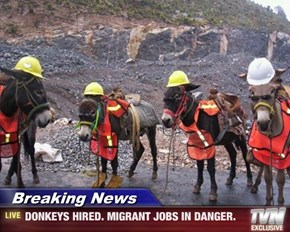 Breaking News - DONKEYS HIRED. MIGRANT JOBS IN DANGER.