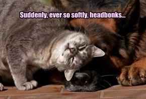 Suddenly, ever so softly, headbonks...