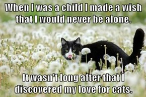 When I was a child I made a wish that I would never be alone.  It wasn't long after that I discovered my love for cats.