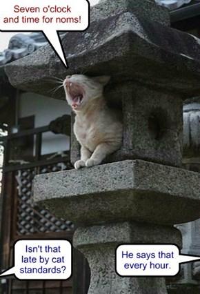 Town Crier kitteh