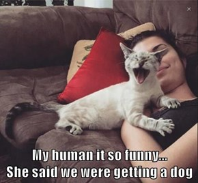 My human it so funny...                 She said we were getting a dog