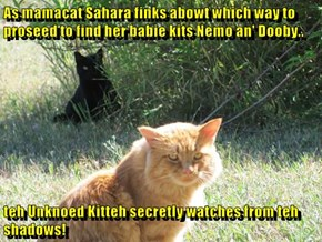 As mamacat Sahara finks abowt which way to proseed to find her babie kits Nemo an' Dooby..  teh Unknoed Kitteh secretly watches from teh shadows!