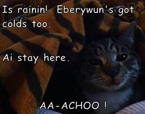 Is rainin!  Eberywun's got colds too.  Ai stay here. AA-ACHOO !