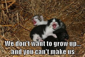 We don't want to grow up...             and you can't make us
