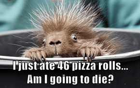 I just ate 46 pizza rolls...                Am I going to die?