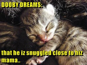 DOOBY DREAMS:  that he iz snuggled close to hiz mama..